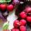 数量限定!¥20,000以上お買上でオーガニックチェリー&赤紫蘇シロップをプレゼント♪