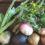 オーガニック野菜BOX販売開始!